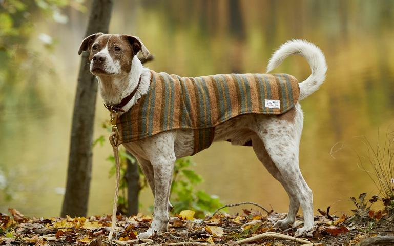 roupa para cachorro 6 - Roupa para Cachorro | É realmente necessário para seu pet?