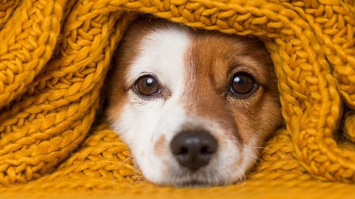roupa para cachorro 7 - Roupa para Cachorro | É realmente necessário para seu pet?