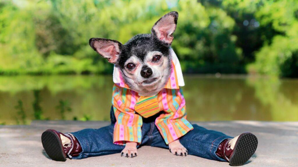 roupa para cachorro 8 1024x573 - Roupa para Cachorro | É realmente necessário para seu pet?