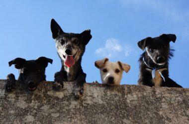 Cachorro Bagunceiro | Saiba como Educar seu PET!