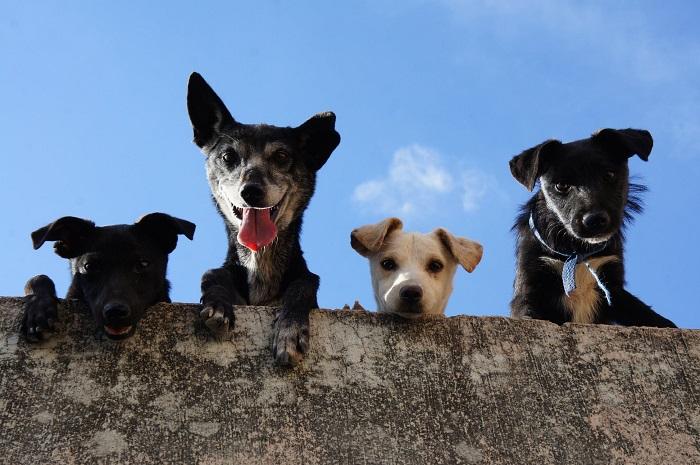 Cachorro Bagunceiro 2 1 - Cachorro Bagunceiro | Saiba como Educar seu PET!