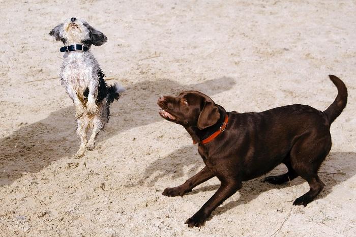 Cachorro Bagunceiro 3 - Cachorro Bagunceiro | Saiba como Educar seu PET!