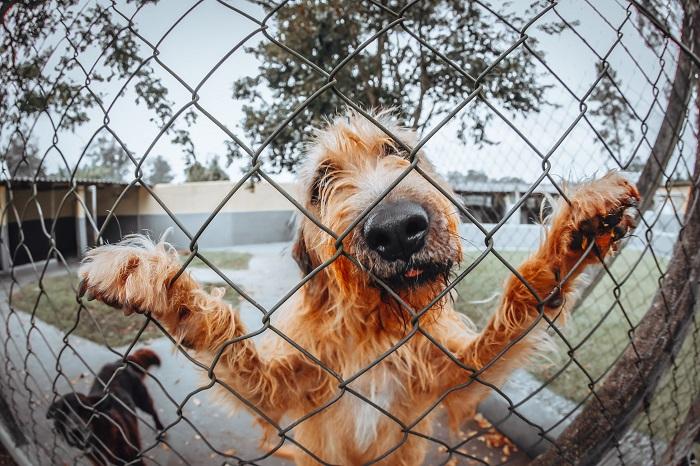 Cachorro Bagunceiro 7 - Cachorro Bagunceiro | Saiba como Educar seu PET!