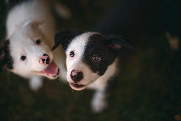 Cachorro Bagunceiro 8 - Cachorro Bagunceiro | Saiba como Educar seu PET!