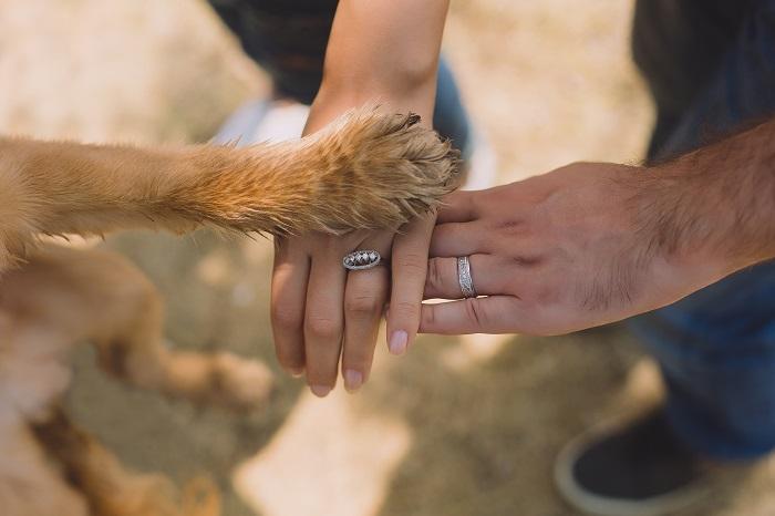 Como adotar cachorro 3 - Como adotar cachorro? Saiba 6 Dicas importantes