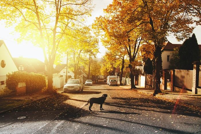 Como adotar cachorro 4 - Como adotar cachorro? Saiba 6 Dicas importantes