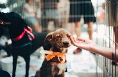 Como adotar cachorro? Saiba 6 Dicas importantes
