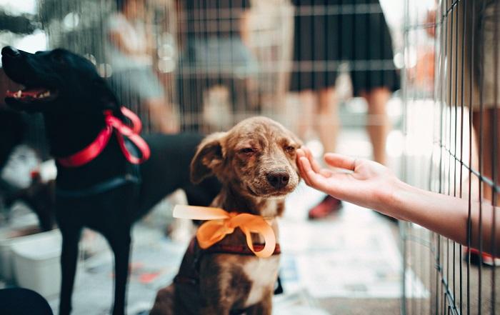 Como adotar cachorro 7 - Como adotar cachorro? Saiba 6 Dicas importantes