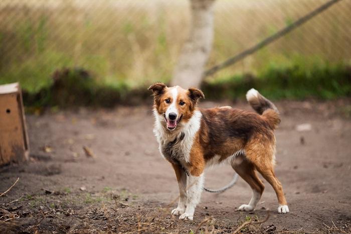 Como adotar cachorro 9 - Como adotar cachorro? Saiba 6 Dicas importantes