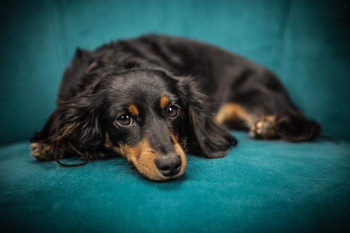 cachorro engasgado 10 - Cachorro Engasgado: O que fazer? Saiba tudo, como lidar