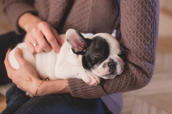 cachorro engasgado 14 - Cachorro Engasgado: O que fazer? Saiba tudo, como lidar