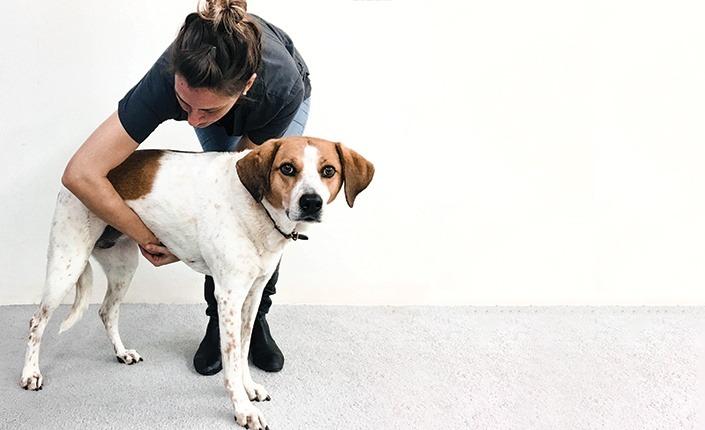 cachorro engasgado 2 - Cachorro Engasgado: O que fazer? Saiba tudo, como lidar