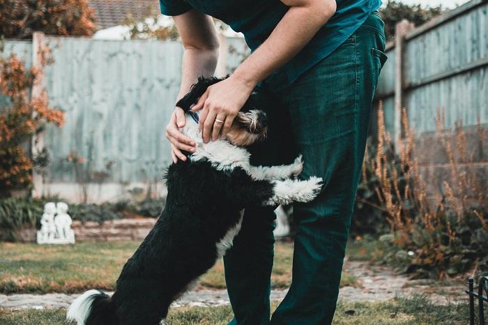 cachorro engasgado 5 - Cachorro Engasgado: O que fazer? Saiba tudo, como lidar