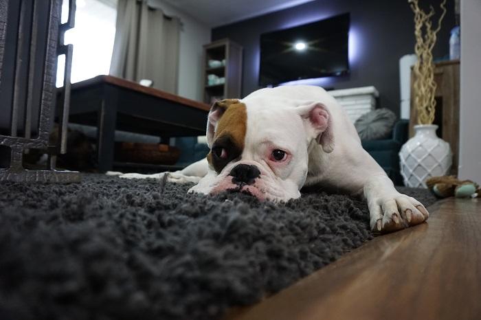 cachorro engasgado 6 - Cachorro Engasgado: O que fazer? Saiba tudo, como lidar