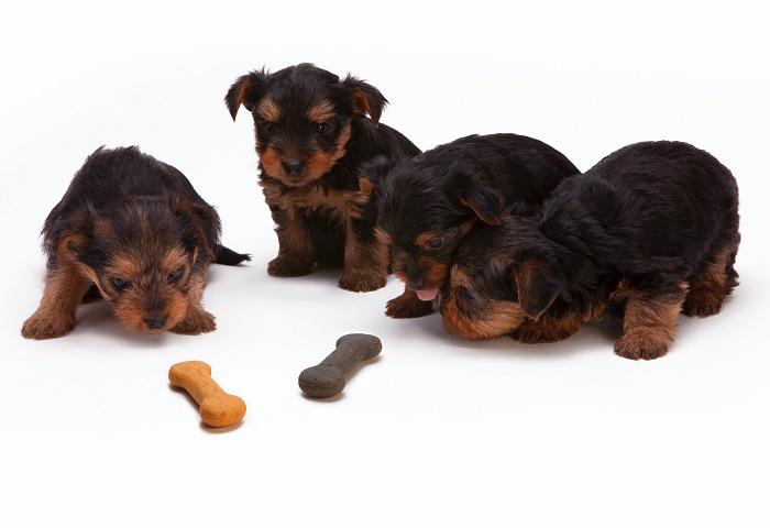 cachorro engasgado 7 - Cachorro Engasgado: O que fazer? Saiba tudo, como lidar