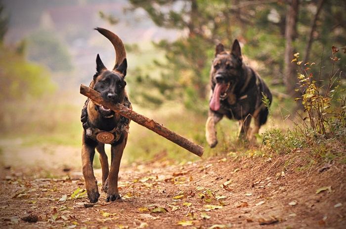 novo cachorro em casa 4 - NOVO CACHORRO EM CASA! Saiba Como evitar as Brigas