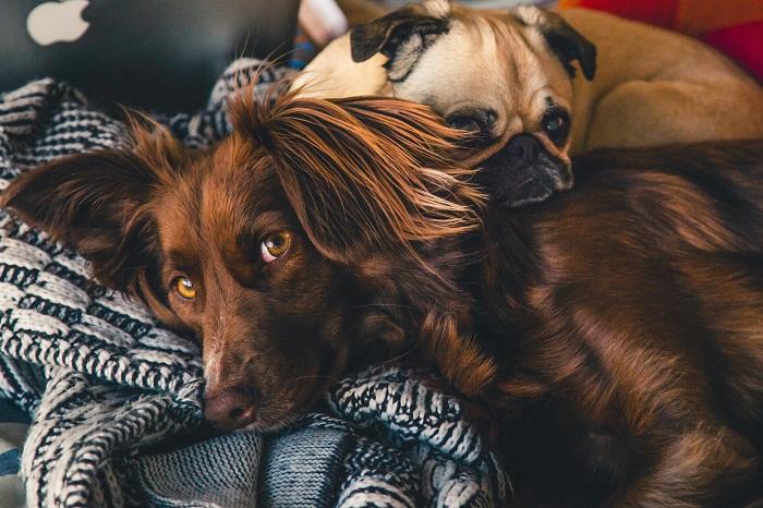 cachorro ou cadela 1 - CACHORRO OU CADELA: Você Já sabe Qual Escolher?