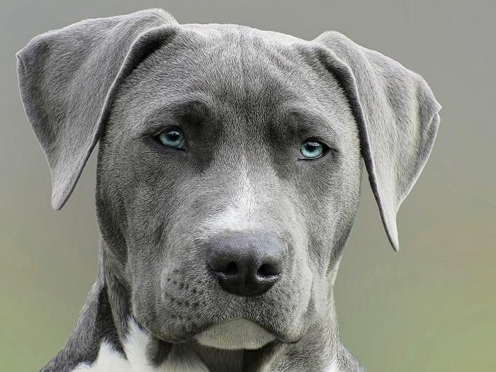 cachorro ou cadela 2 - CACHORRO OU CADELA: Você Já sabe Qual Escolher?