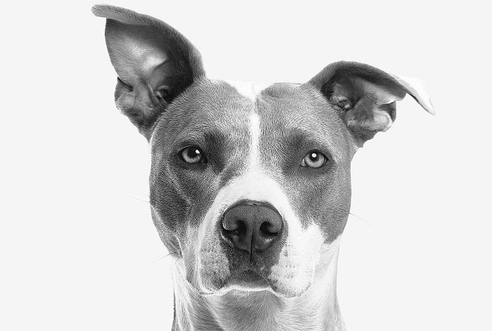 cachorro ou cadela 3 - CACHORRO OU CADELA: Você Já sabe Qual Escolher?