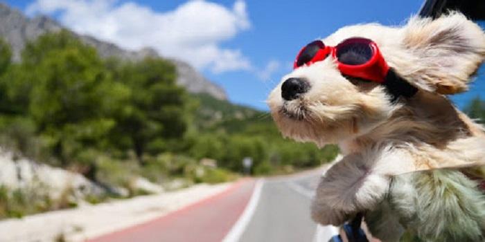 viajar com cachorro 1 - VIAJAR COM CACHORRO? Confira 9 Cuidados Importantes!