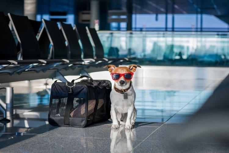 viajar com cachorro 2 - VIAJAR COM CACHORRO? Confira 9 Cuidados Importantes!