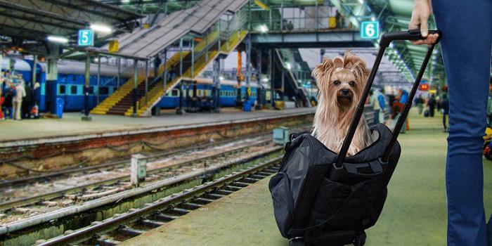 viajar com cachorro 5 - VIAJAR COM CACHORRO? Confira 9 Cuidados Importantes!