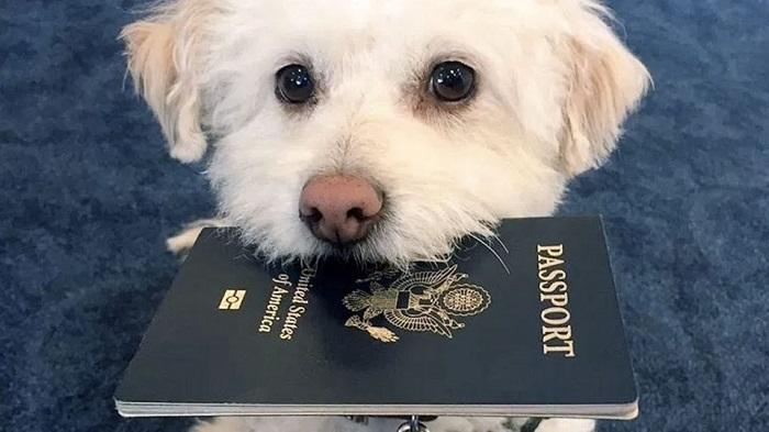 viajar com cachorro 6 - VIAJAR COM CACHORRO? Confira 9 Cuidados Importantes!