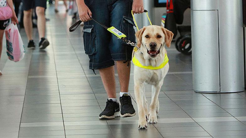 viajar com cachorro 7 - VIAJAR COM CACHORRO? Confira 9 Cuidados Importantes!