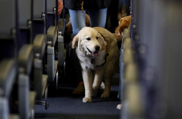 viajar com cachorro 8 - VIAJAR COM CACHORRO? Confira 9 Cuidados Importantes!
