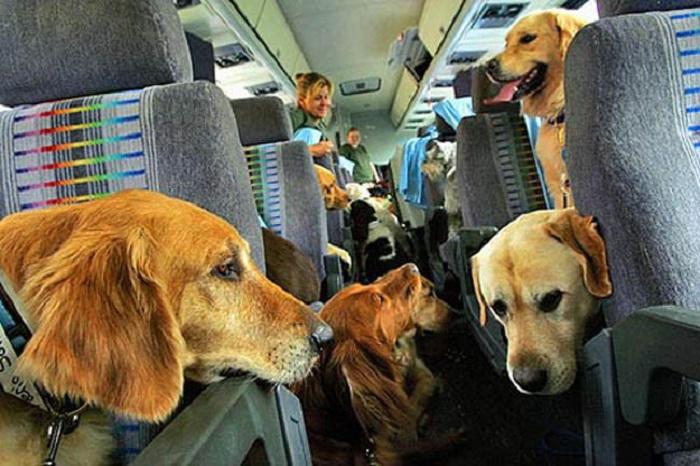 viajar com cachorro 9 - VIAJAR COM CACHORRO? Confira 9 Cuidados Importantes!
